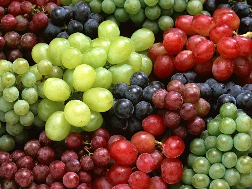 Risultati immagini per festa dell'uva a oliveto citra